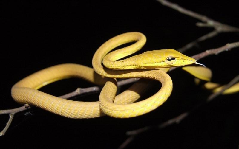 Chiêm bao thấy rắn