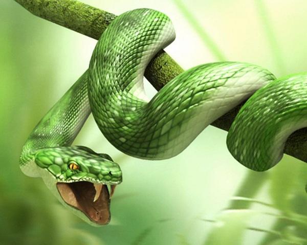giấc mơ rắn là gì