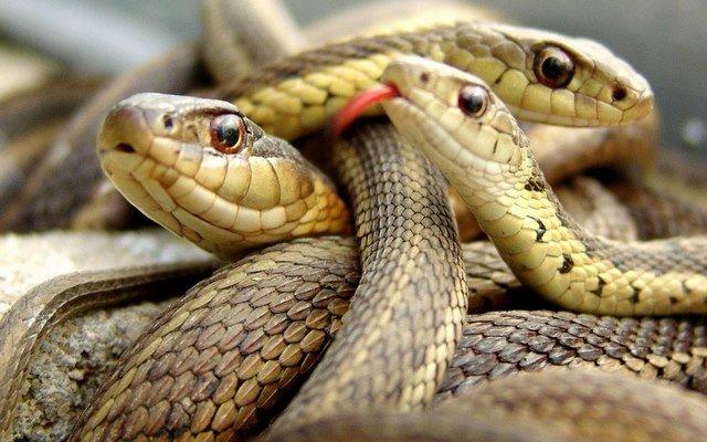 Kết quả hình ảnh cho rắn