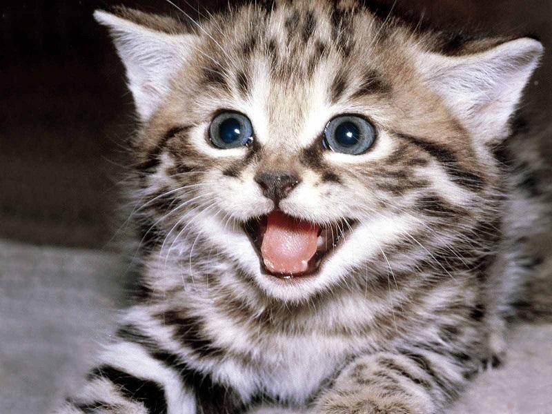 Chiêm bao thấy mèo