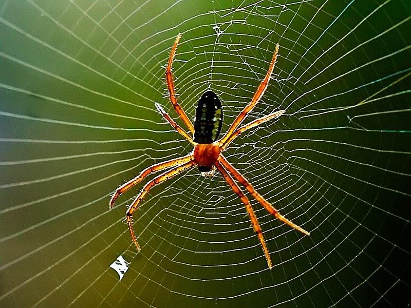 """""""Khám phá"""" điềm báo thú vị khi nằm mơ thấy nhện"""