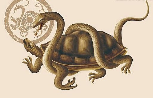 Mơ thấy rùa là điềm báo tốt hay xấu? Bật mí những con số may mắn