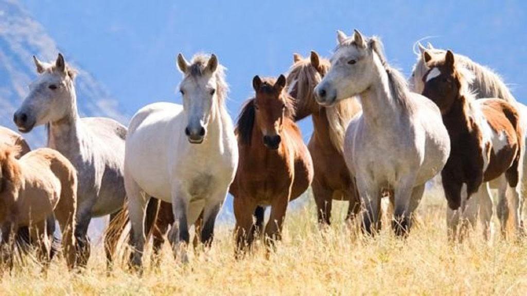 Mơ thấy ngựa là điềm báo tốt hay xấu? Giải mã con số may mắn thú vị